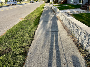 shadow of woman and dog